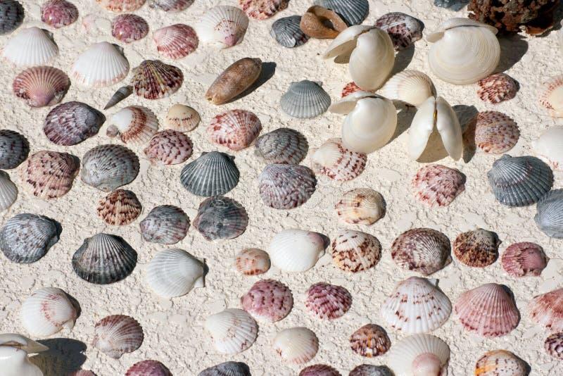 Shells van de mossel royalty-vrije stock foto