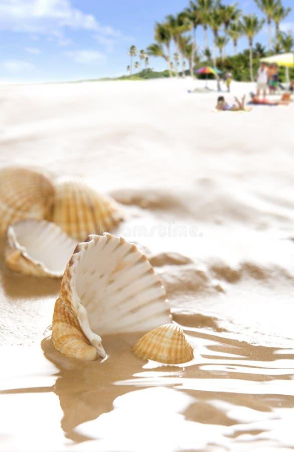 Shells van de schoonheid op het strand royalty-vrije stock afbeeldingen