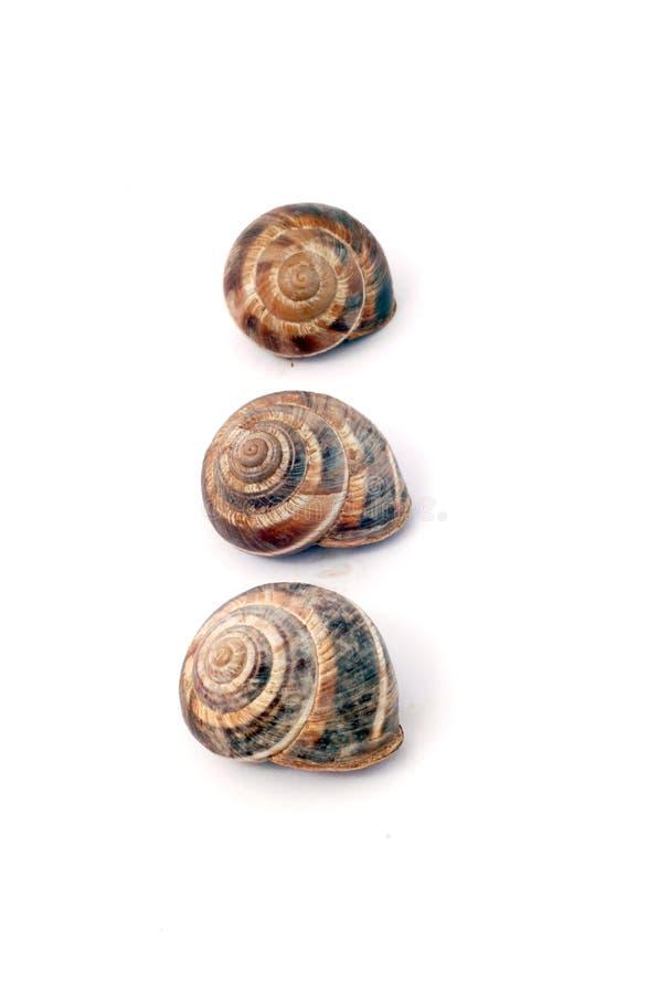 Shells van de tuinslak (Schroefaspersa) royalty-vrije stock afbeeldingen
