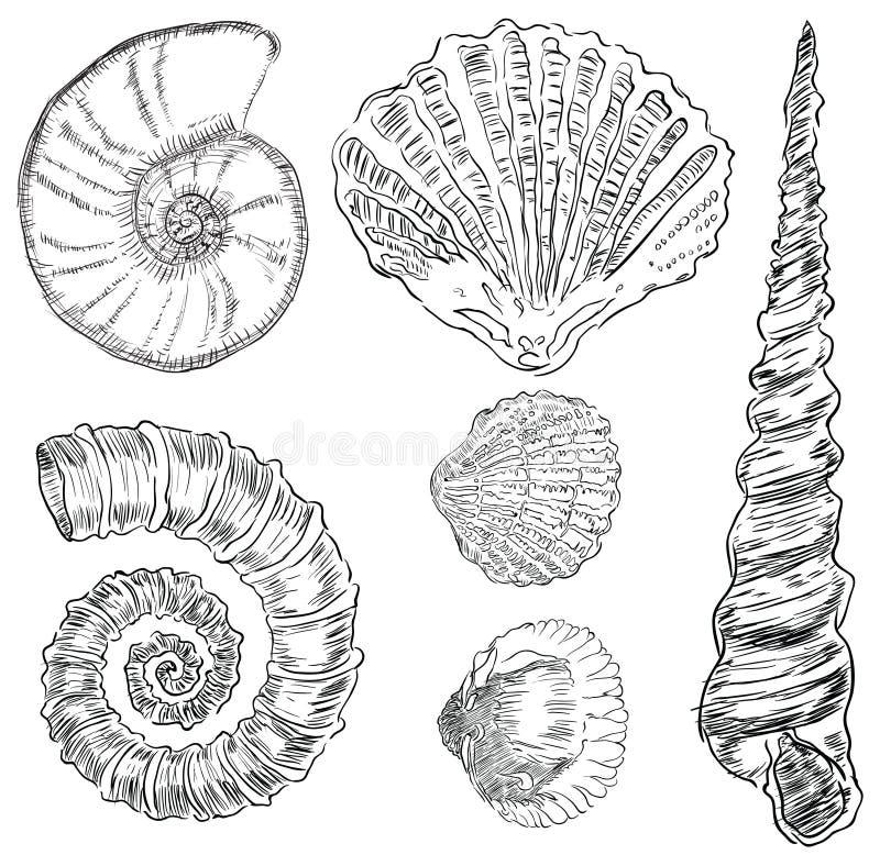 Shells Van Mariene Fauna Stock Foto's
