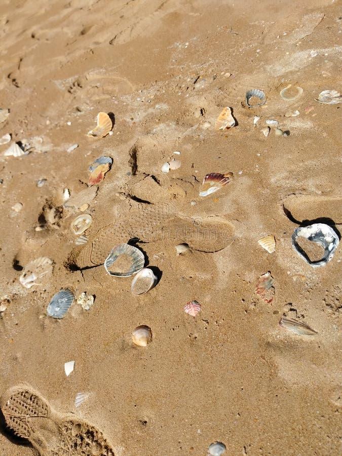 Shells van Portugal in zout water stock foto