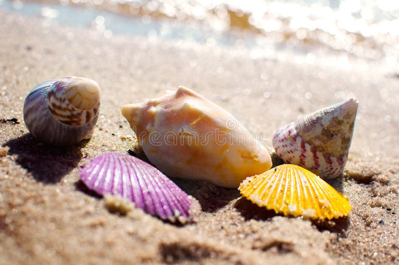 Shells in vivid colors on beach sand stock photography