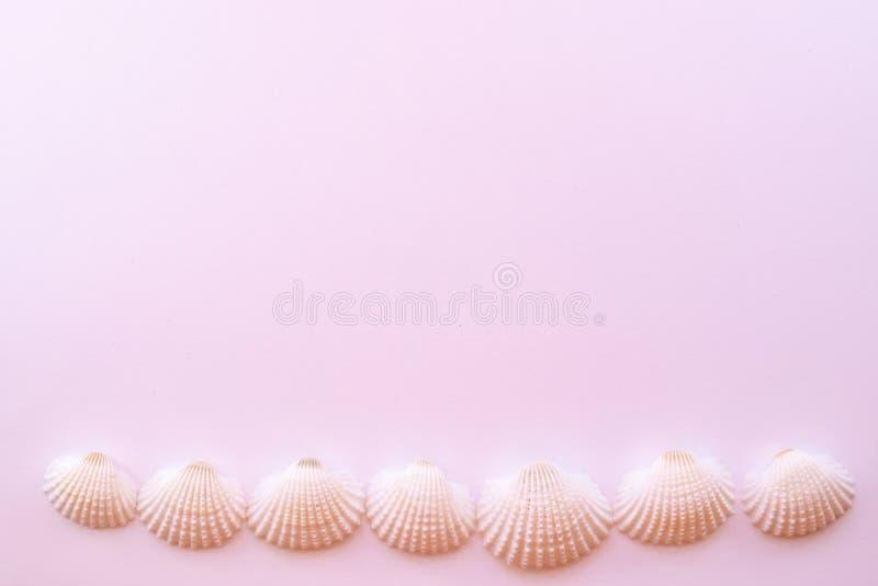 Shells voerden op een rij op een gevoelige roze achtergrond met exemplaarruimte Vlak leg stock afbeeldingen