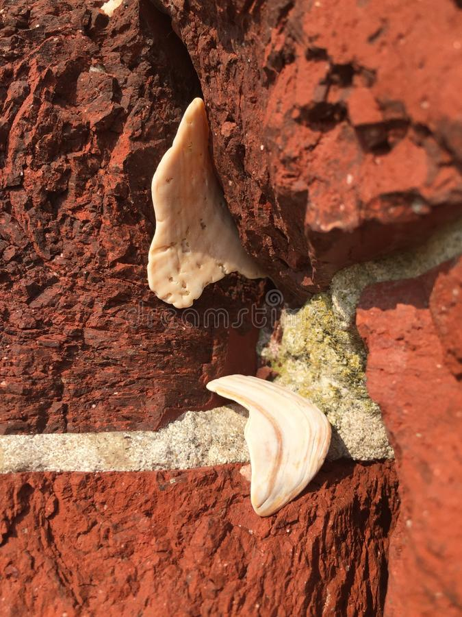 Shells in a wall royalty free stock photos