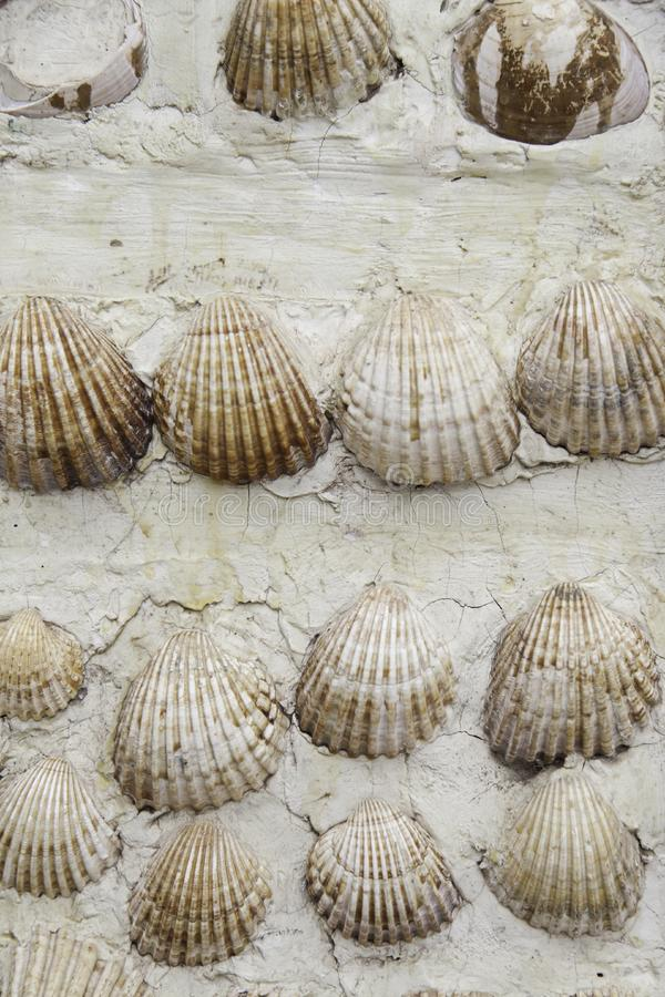 Shells on the wall stock photos