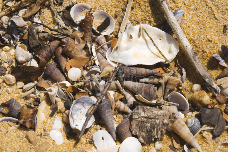 Shells. Washed up on a beach stock image