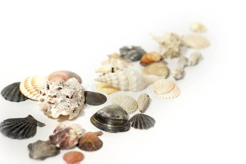 Shells on white royalty free stock photos
