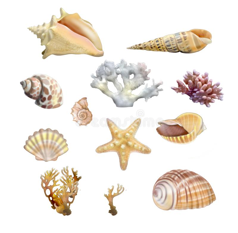 Shells on white background. Shells and corals on Shells and corals on white background royalty free illustration