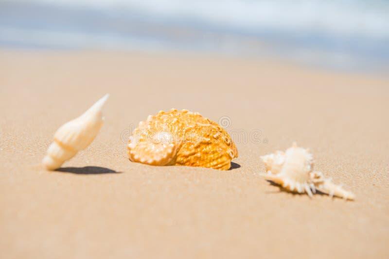 Shellsl del mar en la playa de la arena foto de archivo libre de regalías