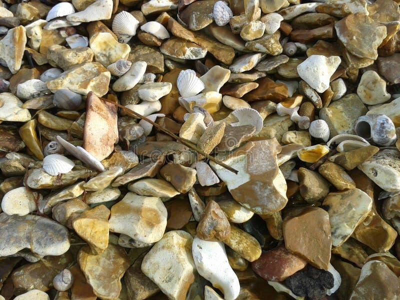 Shellstone photographie stock libre de droits
