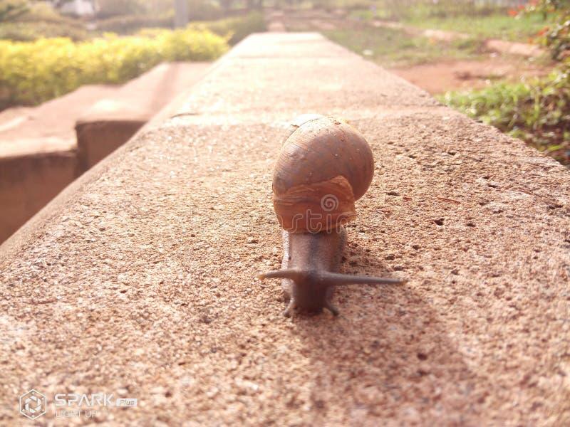 shelly foto de stock