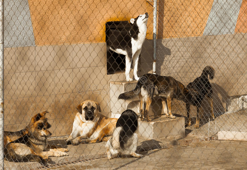 Shelter homeless dogs royalty free stock photos