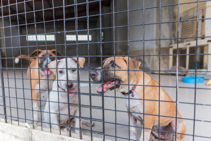 Shelter for homeless dogs, waiting for a new owner royalty free stock image