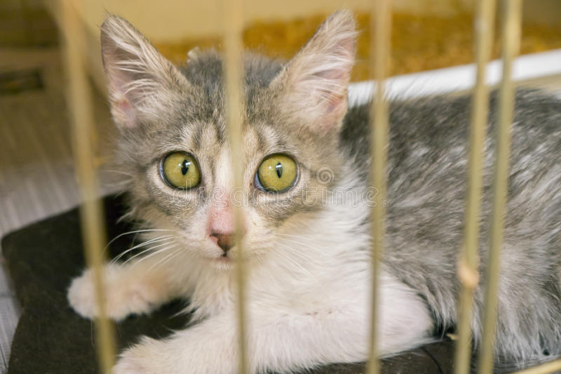 Shelter Kitten For Adoption stock photo