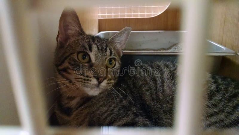 Shelter kitty awaits adoption royalty free stock images