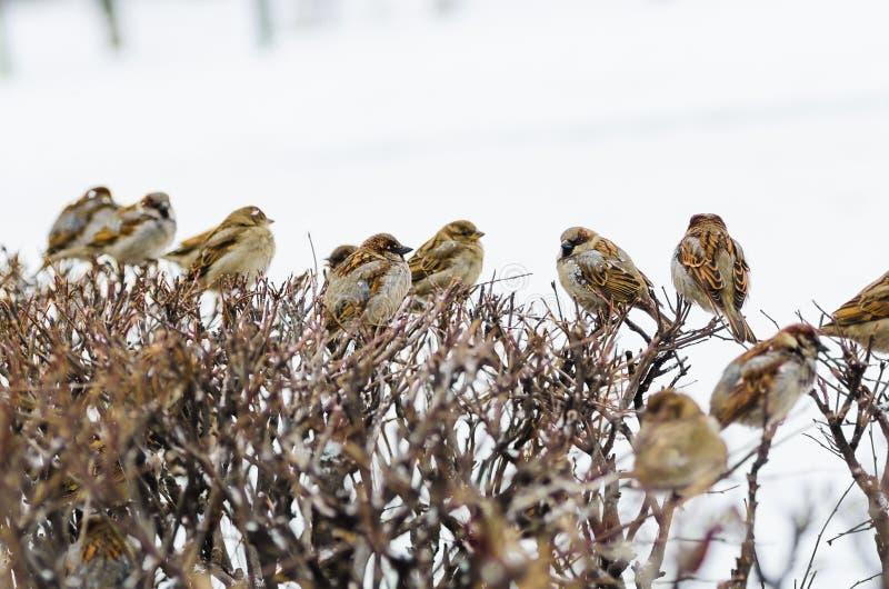 Shelter of small defenceless sparrow birds family stock photos