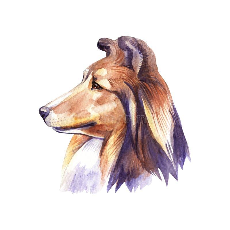 Sheltie Cane del ritratto Illustrazione disegnata a mano dell'acquerello illustrazione vettoriale