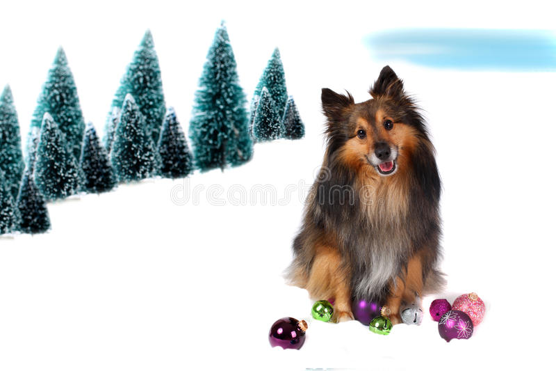 Sheltie Weihnachtshund im Schnee lizenzfreies stockbild