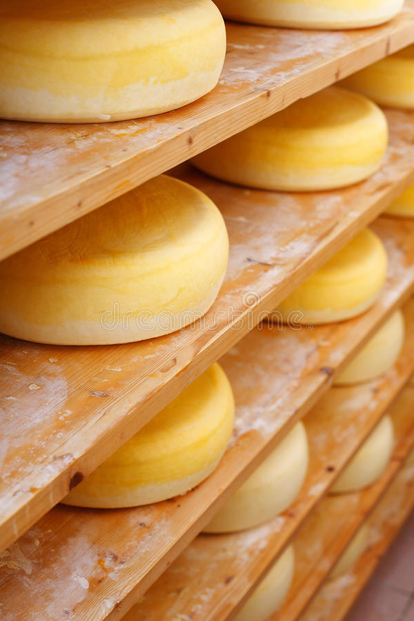 Shelves filled with traditional cheese-wheels. Shelves filled with many traditional cheese-wheels at the cheesemaker shop royalty free stock images