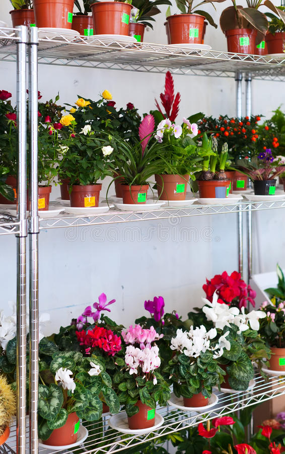 Shelves in flowers shop stock photo