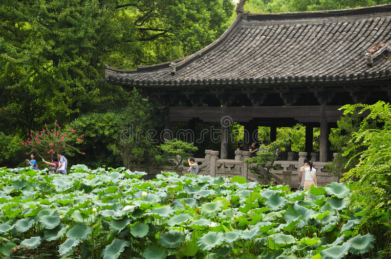 Shen`s Garden Pavilion Shaoxing China. Lotus leaves and flowers in front of a Chinese style building within shen`s garden in Shaoxing China in Zhejiang Province stock photography