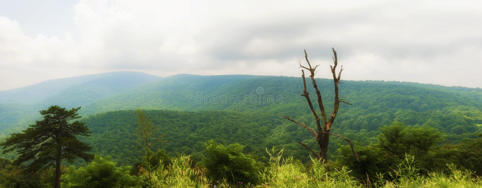 Shenandoah National Park Views along skyline Drive. Panorama View of the landscape in Shenandoah National Park in Virginia runs along the Blue Ridge Mountains in royalty free stock photo