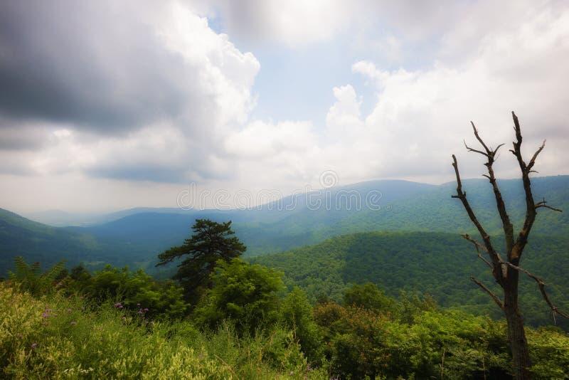 Shenandoah nationalparksikter längs horisontdrev arkivfoto