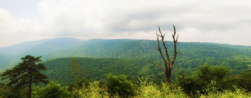 Shenandoah nationalparksikter längs horisontdrev royaltyfri foto