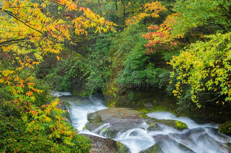 ShenNongJia xiangxiyuan. Hubei shennongjia scenic spot.Shennongjia forest region: to manifest the precious value of ecological protection and green development royalty free stock images
