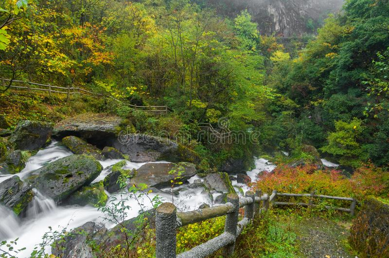 ShenNongJia xiangxiyuan. Hubei shennongjia scenic spot.Shennongjia forest region: to manifest the precious value of ecological protection and green development stock image