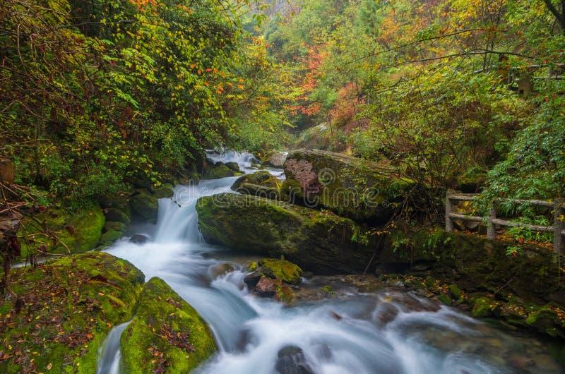 ShenNongJia xiangxiyuan. Hubei shennongjia scenic spot.Shennongjia forest region: to manifest the precious value of ecological protection and green development royalty free stock photos