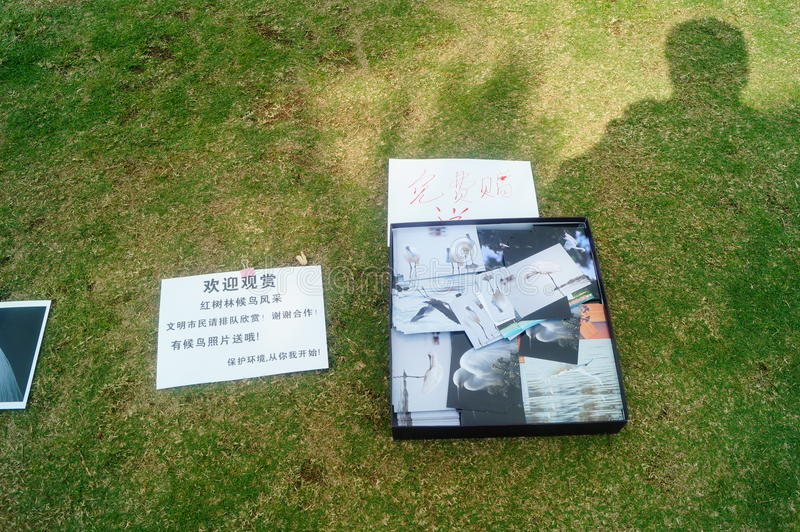 Shenzhen, China: photos of birds, on the lawn, are given away free to tourists. Photos taken by a photographer at the Shenzhen Bay Park on the lawn, if you like stock photo