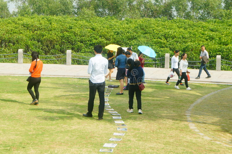 Shenzhen, China: photos of birds, on the lawn, are given away free to tourists. Photos taken by a photographer at the Shenzhen Bay Park on the lawn, if you like royalty free stock image