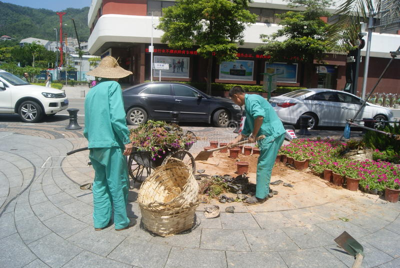 Shenzhen, China: sanitation workers. Shekou in Shenzhen scenic area, several sanitation workers are cleaning the flowerpot etc stock images