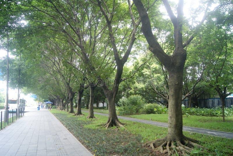Shenzhen, Chine : trottoirs et ceinture verte image stock
