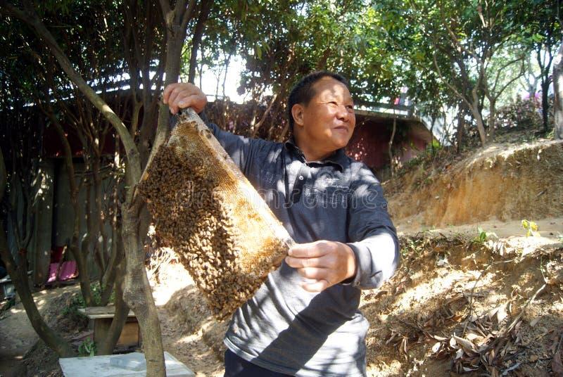 Shenzhen, porcelana: apicultor fotos de stock royalty free