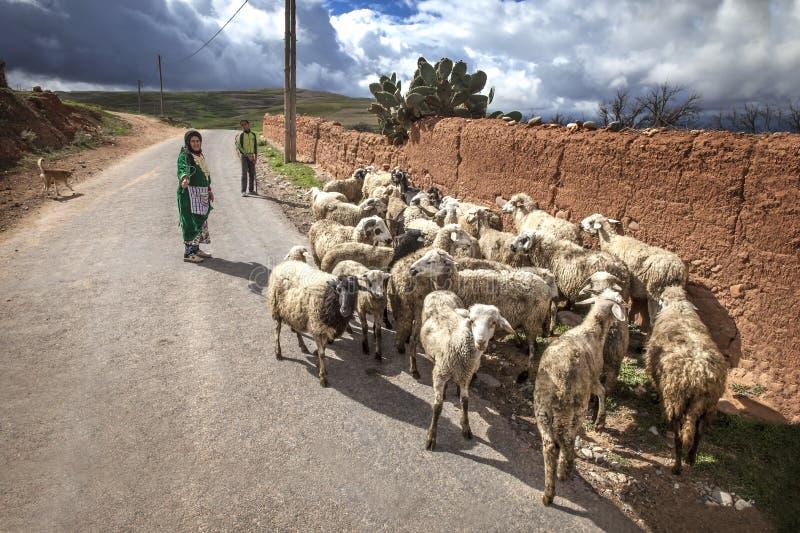 Shepard con las ovejas imagen de archivo