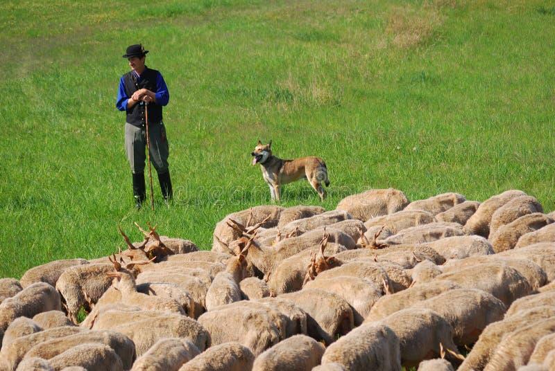 Sheperd, Hortobagy National Park, Hungary Editorial Image