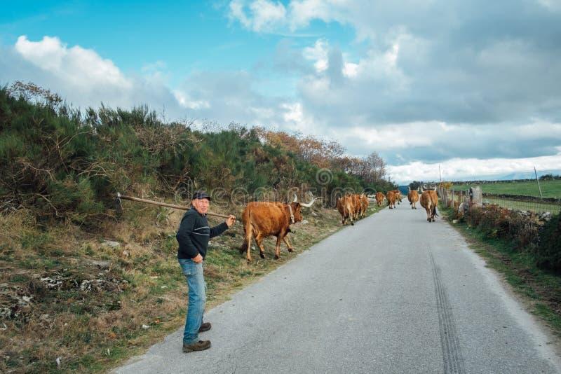 shepherd fotografia stock libera da diritti