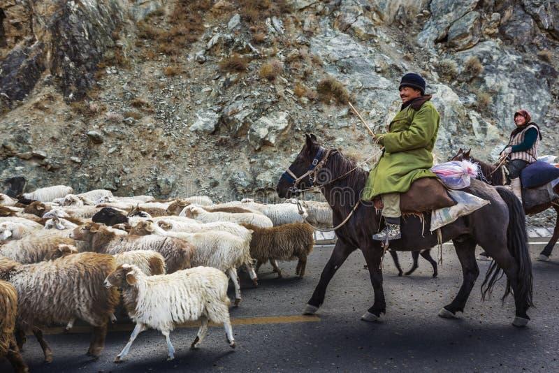 shepherd immagine stock