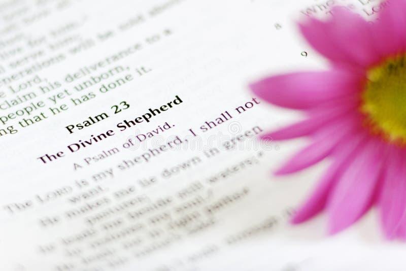 shepherd bożej zdjęcia royalty free
