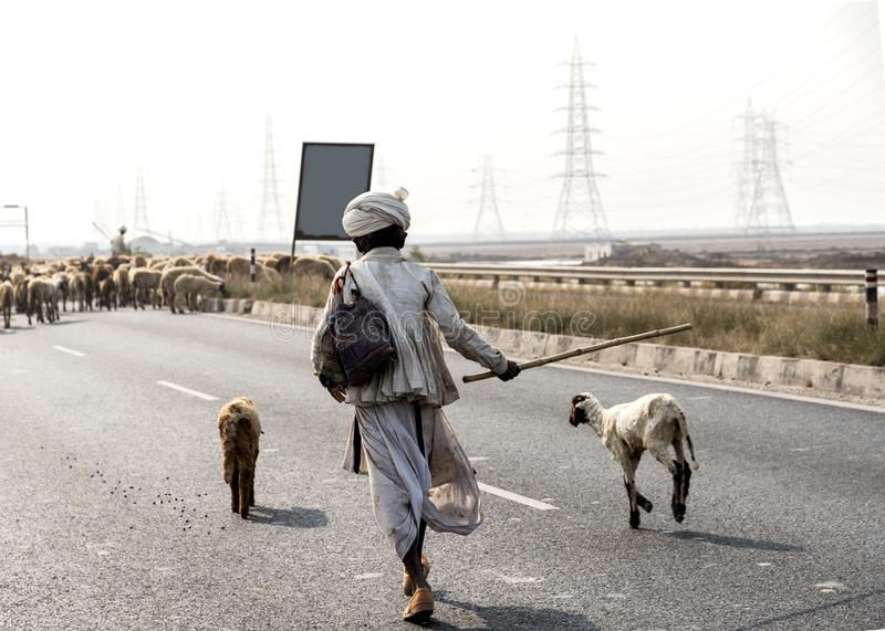 Shepherd com os rebanhos dos carneiros na Índia de Gujarat da estrada de Kutch imagens de stock royalty free