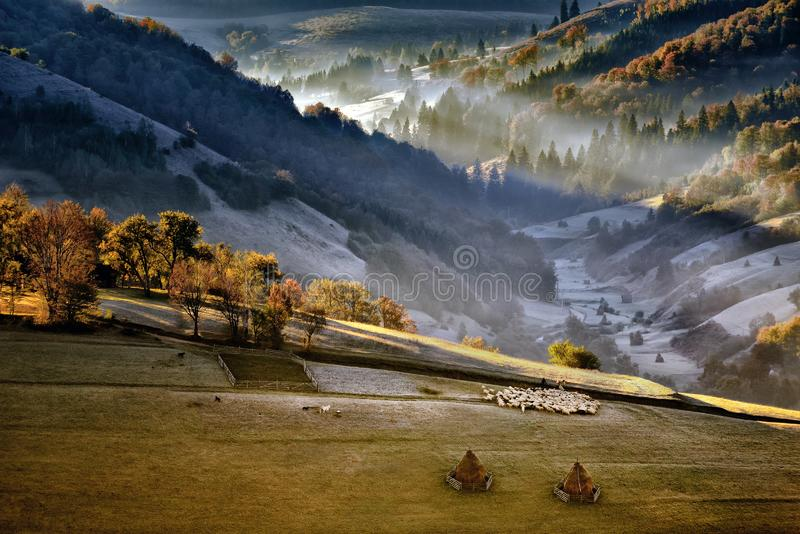 Shepherd in country side of Romania with sheep heard in the mountains royalty free stock image
