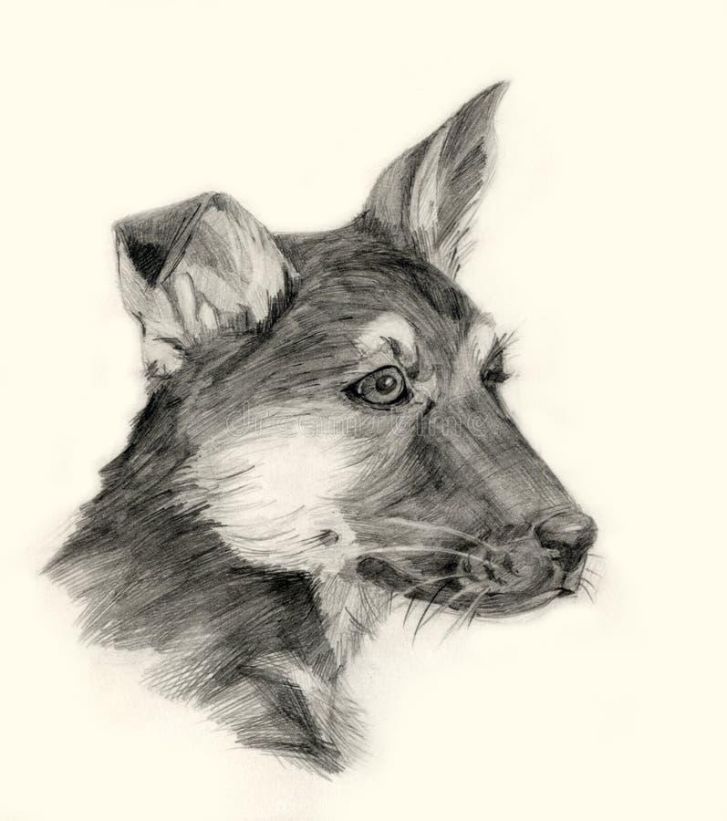 Download Shepherd Dog Drawing Portrait Stock Illustration - Image: 11780052