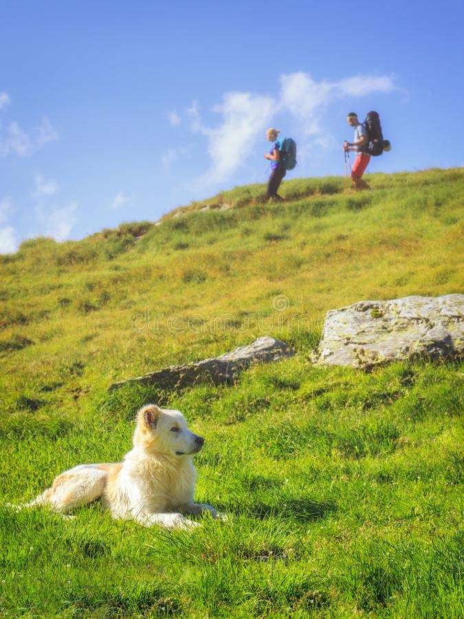 Shepherd dog on a green meadow in the Romanian Carpathians and two hikers stock images