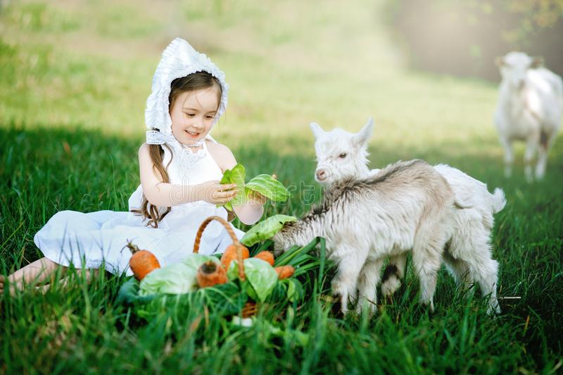 A shepherd girl in a white dress and bonnet feeds a goat with cabbage leaves. Child feeding goat in spring field royalty free stock photos
