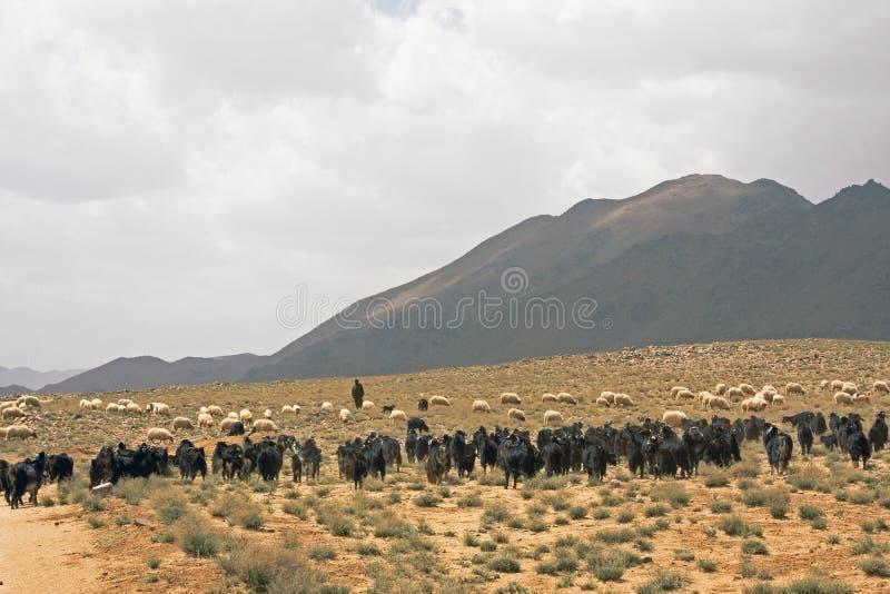 Download Shepherd at Morocco stock photo. Image of warm, desert - 5747414