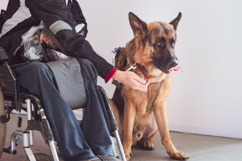 Shepherd, preste serviços de manutenção ao cão com o proprietário o inválido imagem de stock royalty free