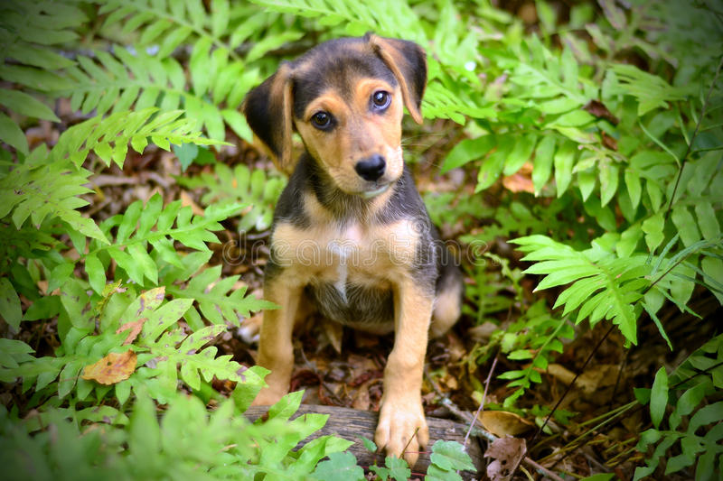 Shepherd Puppy in Ferns. Cute shepherd mix puppy dog sitting in ferns, outdoor pet adoption photography, humane society, Walton County Animal Control stock images
