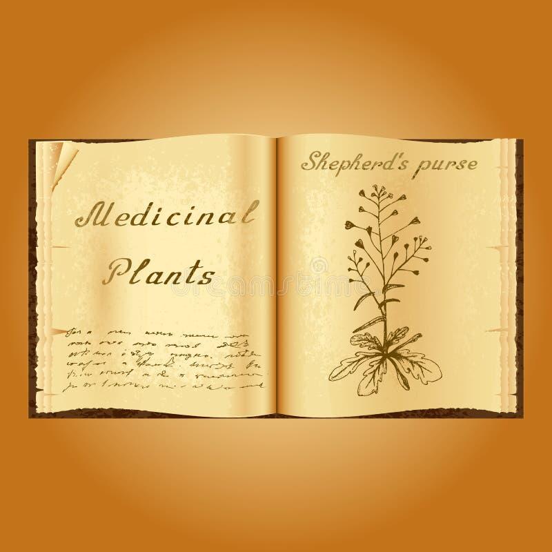 Shepherd& x27; s钱包 植物的例证 医疗工厂 书中医师老开放书 皇族释放例证